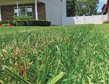 Crabgrass in lawn (Photo: Bob Mann)